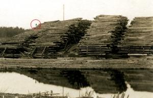 Log piles along the Saco River